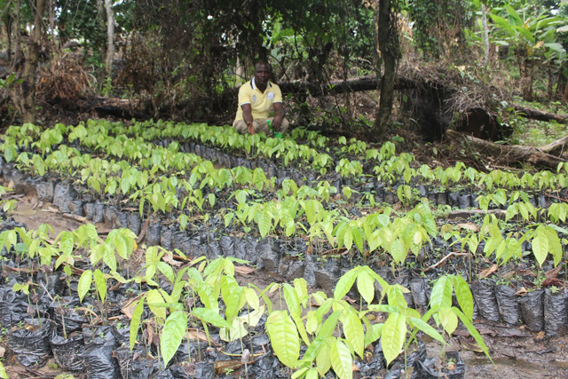 Ooni Ogunwusi Unveils One Million Cocoa Trees Nursery For Youth Empowerment